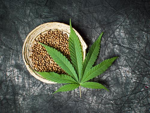 گیاه شاهدانه